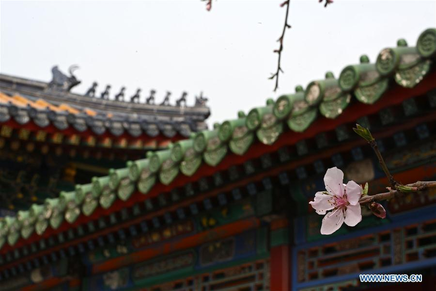 Photo taken on March 28, 2019 shows a blooming flower in the Palace Museum in Beijing, capital of China. (Xinhua/Jin Liangkuai)