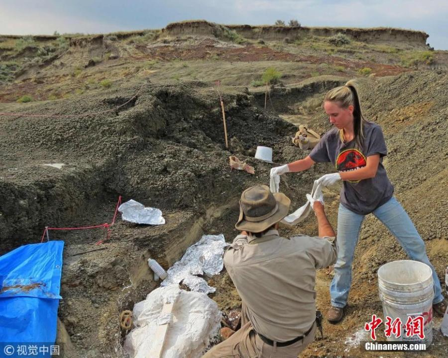 This handout photo obtained March 30, 2019 shows Robert DePalma(L)and field assistant Kylie Ruble(R) excavate fossil carcasses from the Tanis deposit The scientists have discovered the fossilized remains of a mass of creatures that died minutes after a huge asteroid slammed into the Earth 66 million years ago, sealing the fate of the dinosaurs. (Photo/Agencies)
