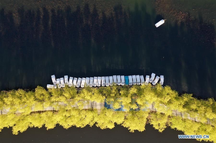 Aerial photo taken on April 1, 2019 shows the scenery of Baiyangdian Lake in Xiongan New Area, north China\'s Hebei Province. On April 1, 2017, China announced plans to establish the Xiongan New Area, about 100 km southwest of Beijing. Known as China\'s \