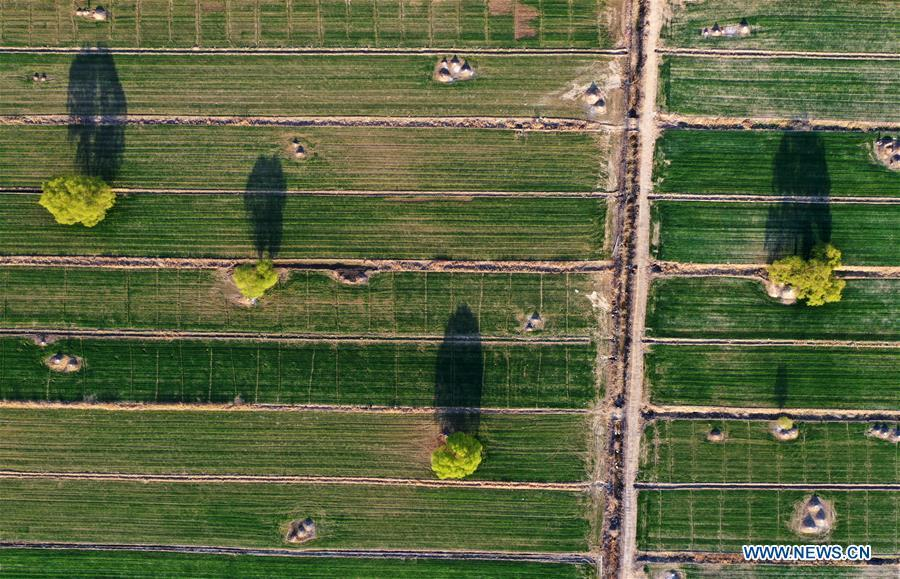 Aerial photo taken on March 31, 2019 shows a farmland near Baiyangdian Lake in Xiongan New Area, north China\'s Hebei Province. On April 1, 2017, China announced plans to establish the Xiongan New Area, about 100 km southwest of Beijing. Known as China\'s \