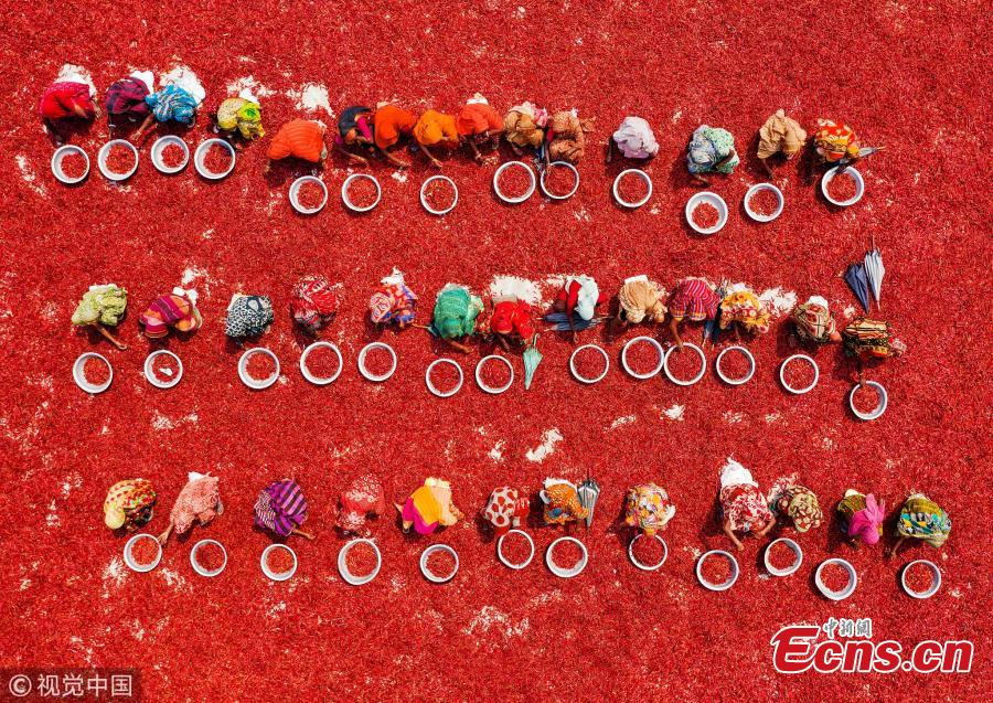 An aerial view of workers as they process and dry red chili peppers under the sun in Upazila, Bangladesh. (Photo/VCG)