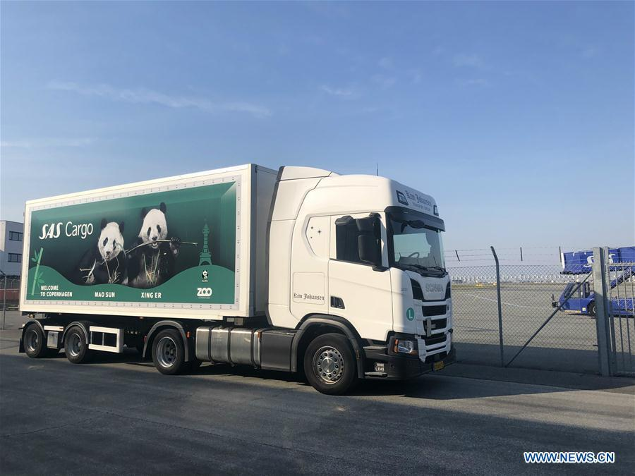 A truck is deployed to receive and transfer Xing Er and Mao Er (Mao Sun), two giant pandas from China, at Kastrup airport in Copenhagen, Denmark, on April 4, 2019. After arriving in Copenhagen on Thursday, the pair of giant pandas Xing Er, a 5-year-old male, and Mao Er, a 4-year-old female, will head to their new home in Copenhagen Zoo for collaborative research. They will live in Denmark for 15 years, according to the agreement signed between the Chinese Association of Zoological Gardens and the zoo in 2017. (Xinhua/He Lijie)