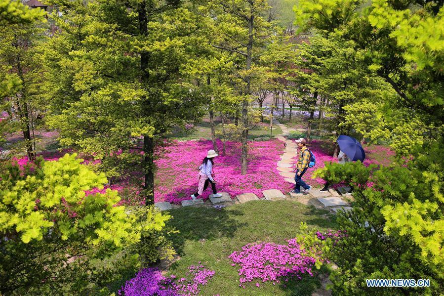 Tourists enjoy themselves at the Zhouji Green Expo Garden during the Qingming Festival holidays in Nantong, east China\'s Jiangsu Province, April 5, 2019. (Xinhua/Xu Congjun)