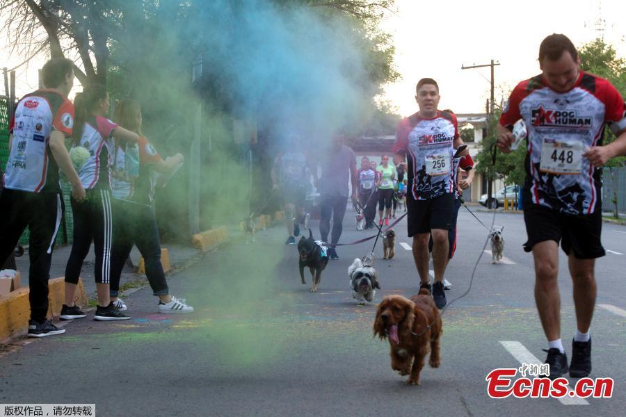 People and their dogs run during the Dog & Human Race Monterrey 2019, in order to foster coexistence with pets in Monterrey, Mexico, on April 7, 2019. (Photo/Agencies)