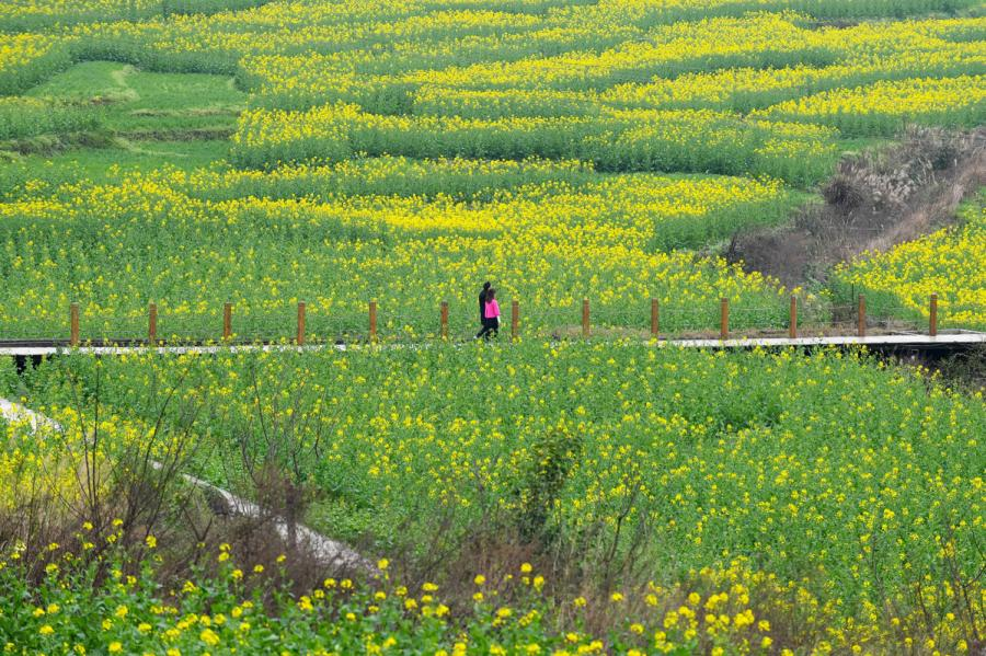 Tourists stroll along a boardwalk across the Eight Diagram-patterned plantation.  (Photo provided to chinadaily.com.cn)