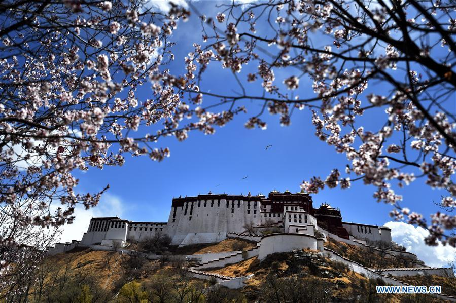 Photo taken on April 8, 2019 shows flowers near the Potala Palace in Lhasa, capital city of southwest China\'s Tibet Autonomous Region. (Xinhua/Chogo)