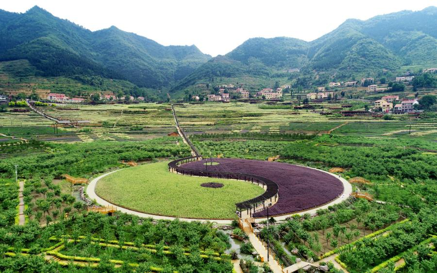 A bird\'s eye view of the plantation in the shape of the traditional Chinese Eight Diagrams. (Photo provided to chinadaily.com.cn)