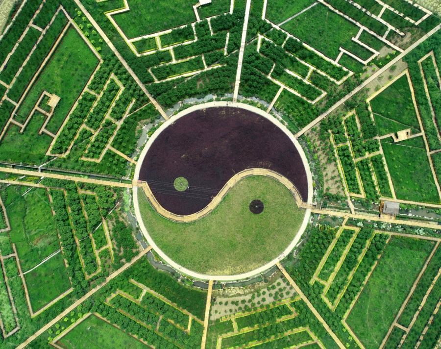 A bird\'s eye view of the Eight Diagrams plantation. (Photo provided to chinadaily.com.cn)