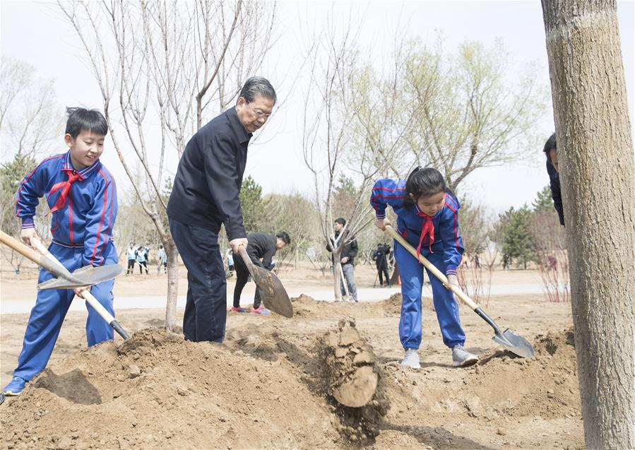Zhao Leji plants a tree in Tongzhou District in Beijing, capital of China, April 8, 2019. Chinese President Xi Jinping, also general secretary of the Communist Party of China Central Committee and chairman of the Central Military Commission, attended the tree-planting activity on Monday. Other Party and state leaders, including Li Zhanshu, Wang Yang, Wang Huning, Zhao Leji, Han Zheng and Wang Qishan, also attended the activity. (Xinhua/Wang Ye)
