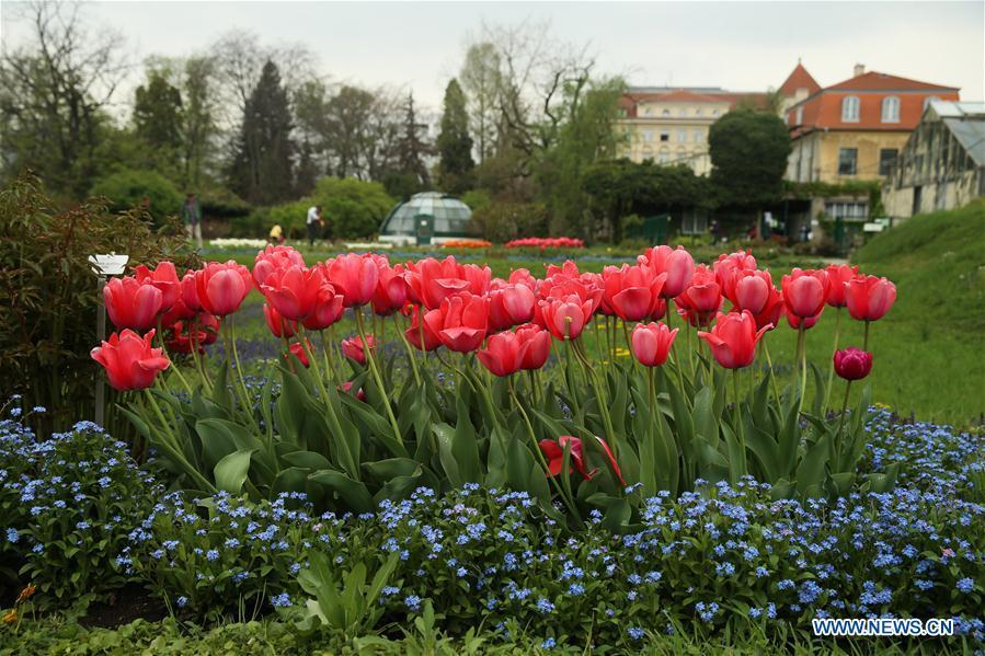 Photo taken on April 10, 2019 shows the flowers at the Botanical Garden in downtown Zagreb, capital of Croatia. (Xinhua/Zheng Huansong)