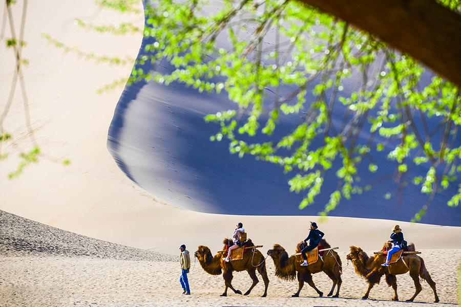 Clear weather and apricot blossoms bring increasing visitors to the Crescent Lake scenic spot (Yueya Quan) in Dunhuang, Northwestern China\'s Gansu Province.(Photo/chinadaily.com.cn) Apricots have come into blossom in Dunhuang city, Northwestern China\'s Gansu Province.  Apricots cover an area of 66.7 hectares at the foot of the Echoing-Sand Mountain (Mingsha Mountain), making the city an ideal destination for spring outings.  The average number of visitors to Crescent Lake (Yueya Quan) per day in early April increased to 2,000 people, double March's figure.  Characterized by its desert culture and Buddhist art, Dunhuang is home to several tourist attractions, the world heritage-listed Mogao Grottoes among them.  According to the local tourism bureau, the six scenic spots in Duanhuang welcomed 28,700 tourists from both home and abroad during the three-day Qingming holiday period (April 5 to April 7, representing a 5.32 percent increase on last year.