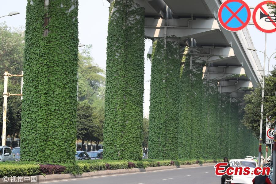 Creeping plants grow up a row of pillars connected to an elevated subway line in Shapingba District, Southwest China\'s Chongqing Municipality. Local authorities planted the green climbing plants to give a fresh look to the urban landscape. (Photo/VCG)