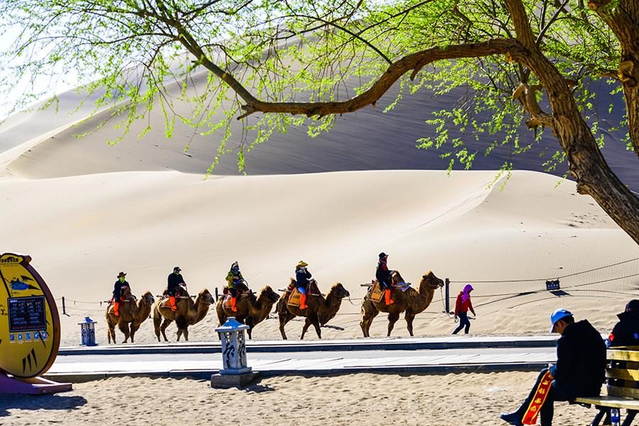 Characterized by its desert culture and Buddhist art, Dunhuang is attracting more and more tourists from home and abroad. (Photo/chinadaily.com.cn)