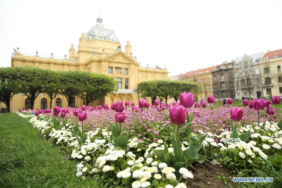 Photo taken on April 10, 2019 shows the flowers at the King Tomislava Square in downtown Zagreb, capital of Croatia. (Xinhua/Zheng Huansong)