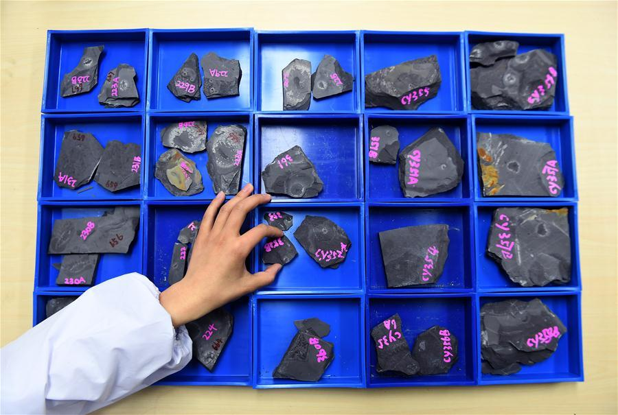 Photo taken on April 8, 2019 shows numbered fossils from the Qingjiang biota in Northwest University in Xi\'an, capital of northwest China\'s Shaanxi Province. (Xinhua/Liu Xiao)