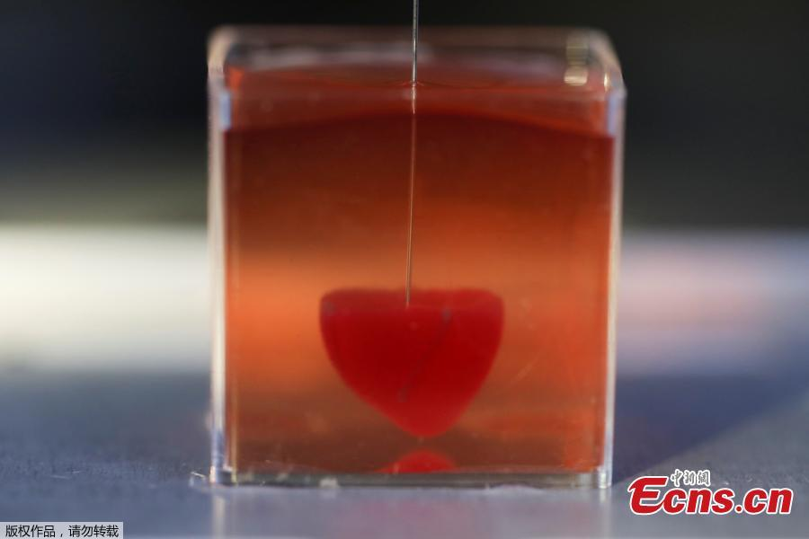 This photo taken on April 15, 2019 at the University of Tel Aviv shows a 3D print of heart with human tissue.  (Photo/Agencies)