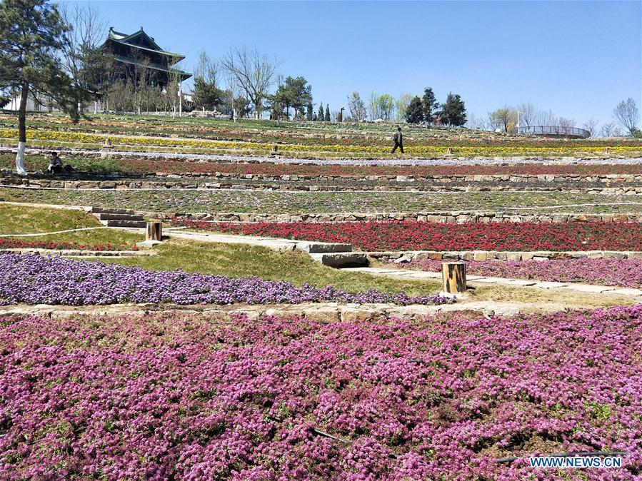 Photo taken with a mobile phone shows a scene on the site for the upcoming 2019 Beijing International Horticultural Exhibition in Yanqing District of Beijing, capital of China, April 15, 2019. (Xinhua/Wei Mengjia)