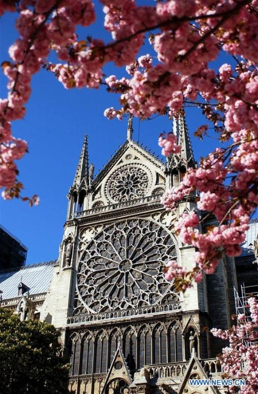 File photo taken on April 7, 2003 shows cherry blossoms near the Notre Dame Cathedral in Paris, France. The devastating fire at Notre Dame Cathedral in central Paris has been put out after burning for 15 hours, local media reported on April 16, 2019. In early evening on April 15, a fire broke out in the famed cathedral. Online footage showed thick smoke billowing from the top of the cathedral and huge flames between its two bell towers engulfing the spire and the entire roof which both collapsed later. Notre Dame is considered one of the finest examples of French Gothic architecture which receives about 12 million visitors every year. (Xinhua/Chen Liqun)
