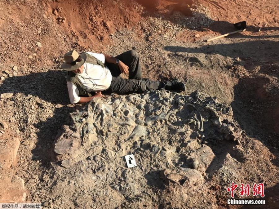 Photo taken on April 10, 2019 shows a 220-million-year-old dinosaur cemetery discovered in western Argentina, with remains of a dozen animals. (Photo/Agencies)