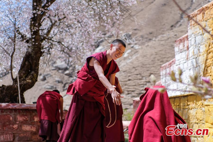 Photo shows scenery of peach blossoms beside the Phabongkha Monastery in northern suburbs of Lhasa, capital city of southwest China\'s Tibet, April 18, 2019. (Photo/China News Serice)