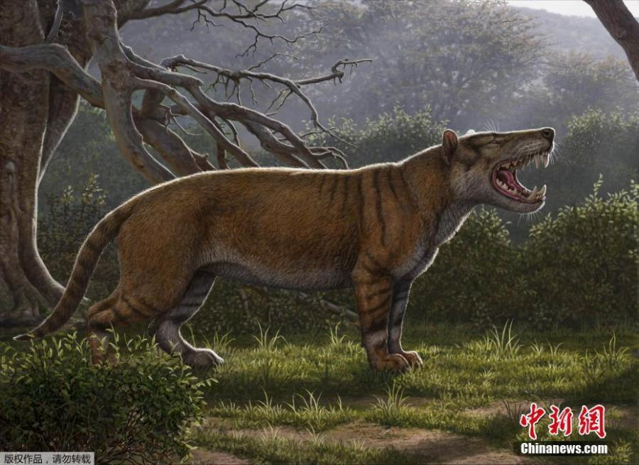 Simbakubwa kutokaafrika, a gigantic mammalian carnivore that lived 22 million years ago in Africa and was larger than a polar bear, is seen in this artist\'s illustration released in Athens, Ohio, U.S., on April 18, 2019. (Photo/Agencies)