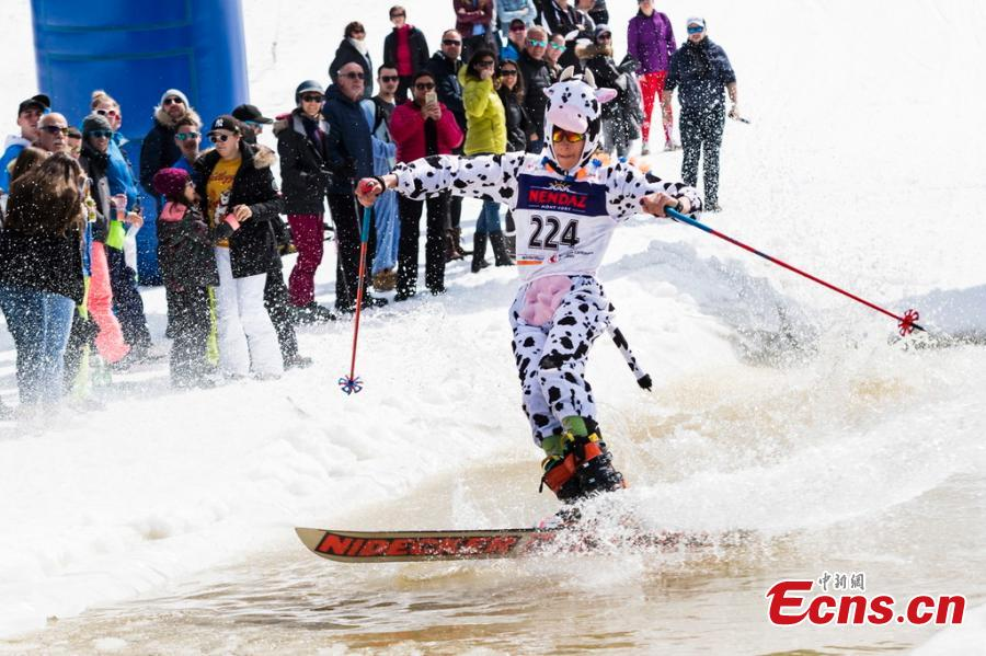 A skier in a cow costume participates in a waterslide contest during the closing event of the \
