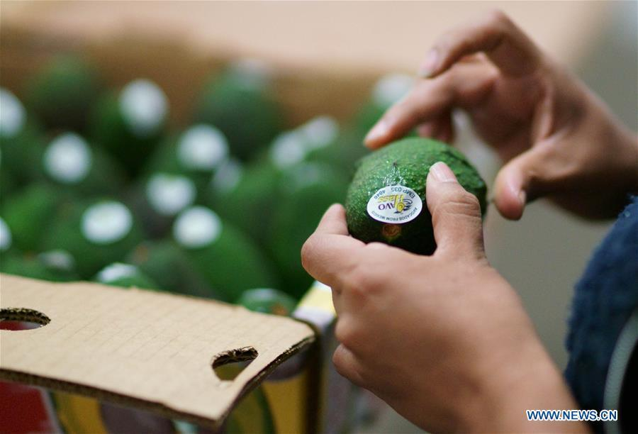 A worker labels and packs avocados after quality check at an avocado packing plant in Uruapanat, in the state of Michoacan, Mexico, on June 3, 2017. Avocado is one of the most famous agricultural products of Mexico. In recent years, Mexico\'s export of avocados to China has grown rapidly. Food of a particular place is an important symbol of local geographic and cultural characteristics. Food carries history and tradition, leads the tide of trade, strengthens diplomatic relations, disseminates and promotes culture. Food has been serving as connections between people around the world. In ancient times, food such as grapes, pomegranates, walnuts, coriander, cucumbers and sesame seeds were introduced to China along the Silk Road. Nowadays, thanks to the Belt and Road Initiative, red wine, coffee, dried fruits, meat, seafood, and dairy products from foreign countries enter the homes of ordinary people, turning daily meals into feasts with exotic cuisines. (Xinhua/Dan Hang)
