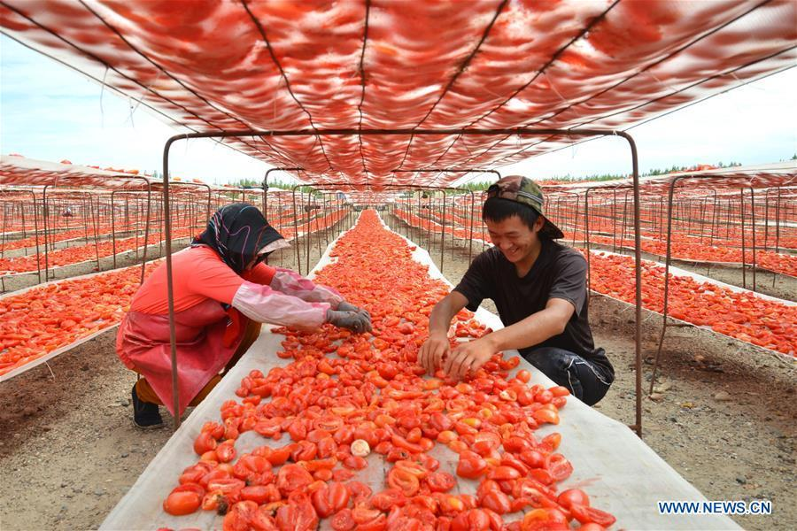 Farmers of Xinjiang Production and Construction Corps air tomatoes at the Yanqi Basin area, northwest China\'s Xinjiang Uygur Autonomous Region, Aug. 17, 2015.The air dried tomato produced in Xinjiang is popular among foreign markets for its high quality. Food of a particular place is an important symbol of local geographic and cultural characteristics. Food carries history and tradition, leads the tide of trade, strengthens diplomatic relations, disseminates and promotes culture. Food has been serving as connections between people around the world. In ancient times, food such as grapes, pomegranates, walnuts, coriander, cucumbers and sesame seeds were introduced to China along the Silk Road. Nowadays, thanks to the Belt and Road Initiative, red wine, coffee, dried fruits, meat, seafood, and dairy products from foreign countries enter the homes of ordinary people, turning daily meals into feasts with exotic cuisines. (Xinhua/Du Bingxun)