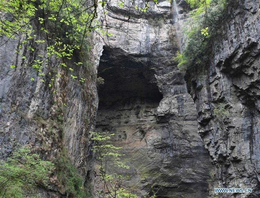 Photo taken on April 22, 2019 shows the crags of Didonghe Tiankeng, a giant karst sinkhole at Huoshizi Village of Ningqiang County in Hanzhong, northwest China\'s Shaanxi Province. With a maximum depth of 340 meters, the Didonghe Tiankeng is the largest in Chanjiayan Tiankeng Group in Ningqiang County. (Xinhua/Zhang Bowen)