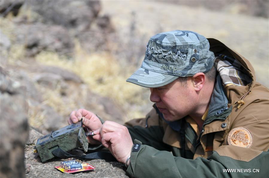 Shuanglong, a man of Mongolian ethnic group, installs an infrared camera near the mouth of a cave that the wolf may inhabit inside a valley along the Hulun Lake in the Hulun Buir City, north China\'s Inner Mongolia Autonomous Region, April 12, 2019. Shuanglong, a volunteer born in the 1980s, has been dedicated to protecting wildlife inhabiting along the Hulun Lake over the past ten years. Over 40 endangered animals have been saved through his efforts. Shuanglong has organized various activities including photo exhibitions and lectures, as a way to raise awareness of wildlife protection among the public. Affected by Shuanglong, some volunteers also joined him to protect wildlife along the Hulun Lake. (Xinhua/Peng Yuan)