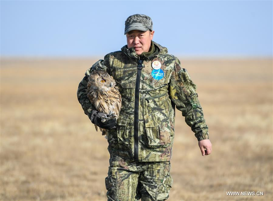 Shuanglong, a man of Mongolian ethnic group, takes an eagle owl for training before releasing it into the wild along the Hulun Lake in the Hulun Buir City, north China\'s Inner Mongolia Autonomous Region, April 13, 2019. Shuanglong, a volunteer born in the 1980s, has been dedicated to protecting wildlife inhabiting along the Hulun Lake over the past ten years. Over 40 endangered animals have been saved through his efforts. Shuanglong has organized various activities including photo exhibitions and lectures, as a way to raise awareness of wildlife protection among the public. Affected by Shuanglong, some volunteers also joined him to protect wildlife along the Hulun Lake. (Xinhua/Peng Yuan)