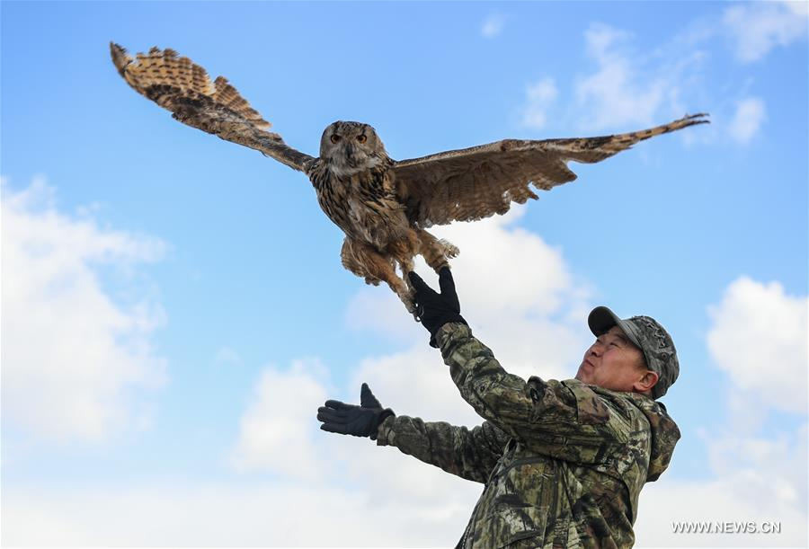 Shuanglong, a man of Mongolian ethnic group, trains an eagle owl before releasing it into the wild along the Hulun Lake in the Hulun Buir City, north China\'s Inner Mongolia Autonomous Region, April 13, 2019. Shuanglong, a volunteer born in the 1980s, has been dedicated to protecting wildlife inhabiting along the Hulun Lake over the past ten years. Over 40 endangered animals have been saved through his efforts. Shuanglong has organized various activities including photo exhibitions and lectures, as a way to raise awareness of wildlife protection among the public. Affected by Shuanglong, some volunteers also joined him to protect wildlife along the Hulun Lake. (Xinhua/Peng Yuan)