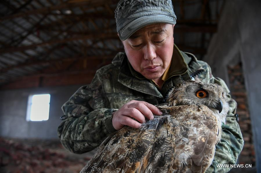 Shuanglong, a man of Mongolian ethnic group, checks an injured eagle owl at the storeroom of his home in New Barag Right Banner of the Hulun Buir City, north China\'s Inner Mongolia Autonomous Region, April 13, 2019. Shuanglong, a volunteer born in the 1980s, has been dedicated to protecting wildlife inhabiting along the Hulun Lake over the past ten years. Over 40 endangered animals have been saved through his efforts. Shuanglong has organized various activities including photo exhibitions and lectures, as a way to raise awareness of wildlife protection among the public. Affected by Shuanglong, some volunteers also joined him to protect wildlife along the Hulun Lake. (Xinhua/Peng Yuan)