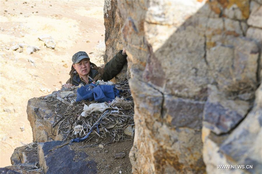 Shuanglong, a man of Mongolian ethnic group, checks a raptor\'s nest on the cliff along the Hulun Lake in the Hulun Buir City, north China\'s Inner Mongolia Autonomous Region, April 12, 2019. Shuanglong, a volunteer born in the 1980s, has been dedicated to protecting wildlife inhabiting along the Hulun Lake over the past ten years. Over 40 endangered animals have been saved through his efforts. Shuanglong has organized various activities including photo exhibitions and lectures, as a way to raise awareness of wildlife protection among the public. Affected by Shuanglong, some volunteers also joined him to protect wildlife along the Hulun Lake. (Xinhua/Peng Yuan)