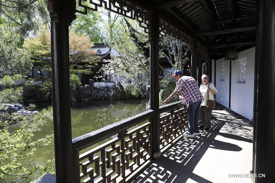 Visitors enjoy the spring scenery in the Chinese Scholar\'s Garden on Staten Island, New York, the United States, April 23, 2019. (Xinhua/Wang Ying)
