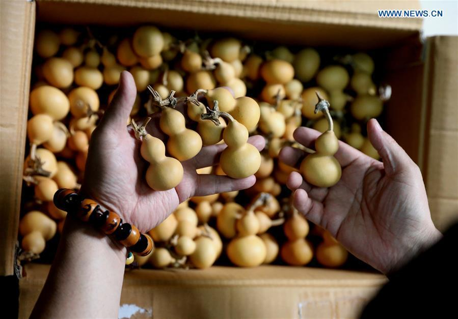 Craftsman Liu Chunpu selects cucurbits at a studio in Yuhua District of Shijiazhuang, north China\'s Hebei Province, April 23, 2019. Liu Chunpu, a staff member of Hebei Normal University, has devoted himself in cucurbit pyrography for more than 40 years. (Xinhua/Liang Zidong)