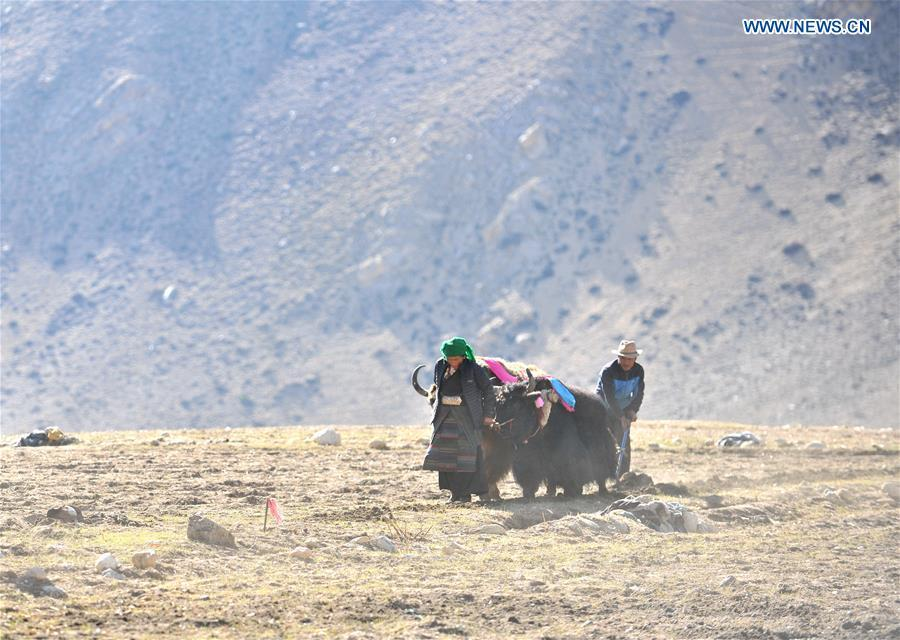 Barley seeds are sowed by farmers of Gangga Village in Nyalam County of Xigaze City, southwest China\'s Tibet Autonomous Region, April 26, 2019. As the weather warms up, spring plowing here starts, which extends from low altitude areas toward high altitude ones. (Xinhua/Jigme Dorge)