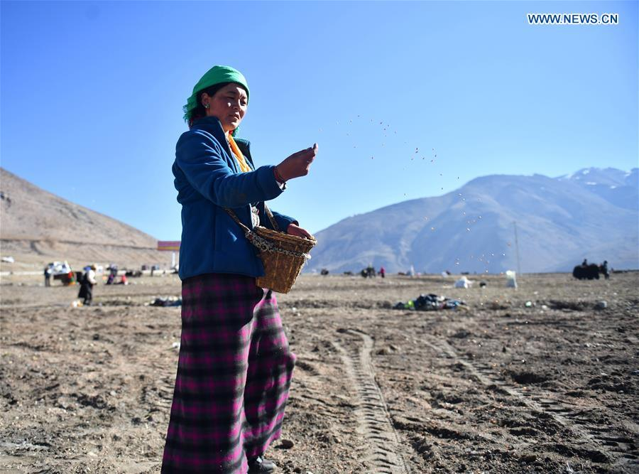 Barley seeds are sowed by a farmer of Gangga Village in Nyalam County of Xigaze City, southwest China\'s Tibet Autonomous Region, April 26, 2019. As the weather warms up, spring plowing here starts, which extends from low altitude areas toward high altitude ones. (Xinhua/Jigme Dorge)