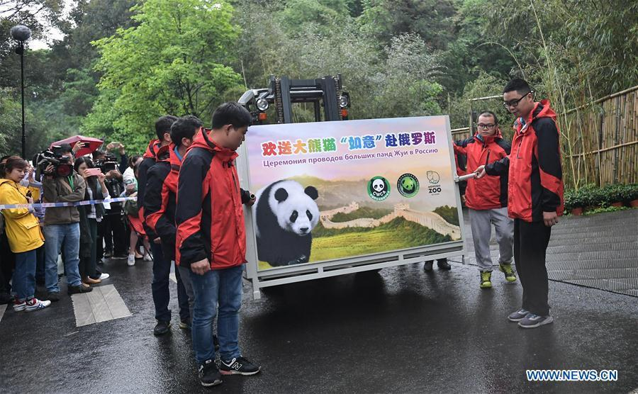 Staff members convey a transport cage containing Ru Yi, the male panda born in 2016, to a lorry at the Bifengxia base of the China Conservation and Research Center for the Giant Panda in Ya\'an, southwest China\'s Sichuan Province, April 29, 2019. Chinese researchers held a send-off ceremony for a pair of giant pandas who are to depart for Moscow on Monday for a 15-year collaborative research. Ru Yi, the male panda born in 2016, and Ding Ding, the female panda born in 2017, are scheduled to board a flight at 1:45 p.m. in Chengdu and arrive in Moscow at 10:00 p.m. Beijing Time the same day, the panda research base in southwest China\'s Sichuan Province said. (Xinhua/Xue Yubin)