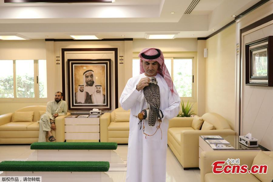 An Emirati man arrives with his falcon at the Abu Dhabi Falcon Hospital in Abu Dhabi, United Arab Emirates April 28, 2019. When a falcon in the Gulf Arab countries falls sick, the owners of these expensive hunting birds will take them to the world\'s largest falcon hospital in Abu Dhabi. (Photo/Agencies)