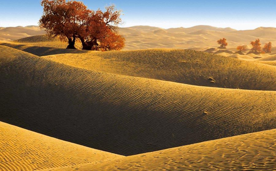 The Taklimakan desert in Xinjiang Uygur autonomous region.  (Photo provided to chinadaily.com.cn)