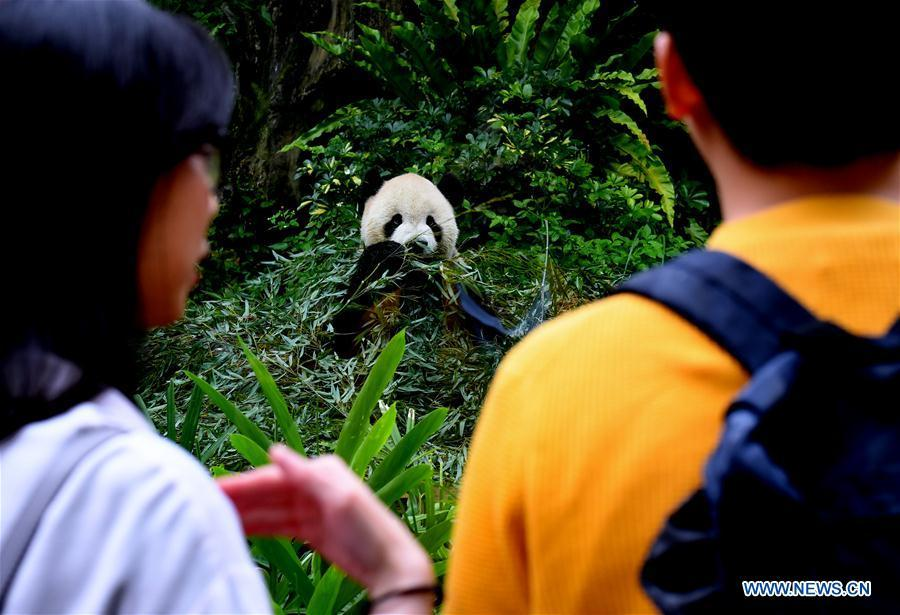 Tourists view the giant panda at the Taipei Zoo in Taipei, southeast China\'s Taiwan, May 6, 2019. At the Taipei Zoo, the two giant pandas Tuantuan (male) and Yuanyuan (female) have drawn large crowds eager to catch a glimpse of the chubby bears through the past ten years. The two giant pandas were sent to Taiwan from the Chinese mainland in late 2008. In 2013, Tuantuan and Yuanyuan had a baby called Yuanzai. (Xinhua/Zhang Guojun)