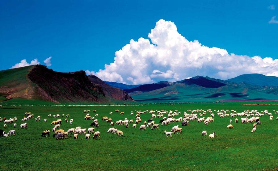 A pasture in North China\'s Inner Mongolia autonomous region.  (Photo provided to chinadaily.com.cn)