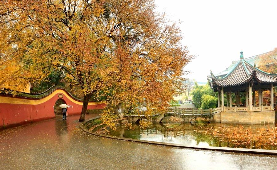 Autumn scenery at the time-honored Yuelu Academy in Changsha city, Central China\'s Hunan Province.  (Photo provided to chinadaily.com.cn)