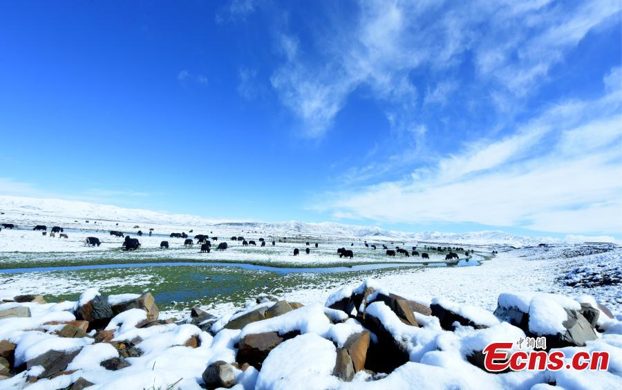 Snow covers the Hongyuan Prairie in Ngawa Tibetan and Qiang Autonomous Prefecture, Southwest China\'s Sichuan Province, May 7, 2019, after a cold front hit. The vast grassland is a tourist attraction in the province. (Photo: China News Service/Mou Jinghong)