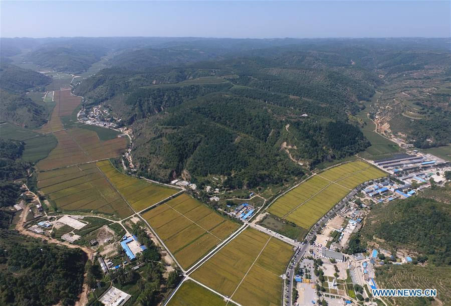 Aerial photo shows the rice fields at Nanniwan in Yan\'an, northwest China\'s Shaanxi Province on Sept. 12, 2017. Yan\'an, a former revolutionary base of the Communist Party of China (CPC), is no longer labeled \