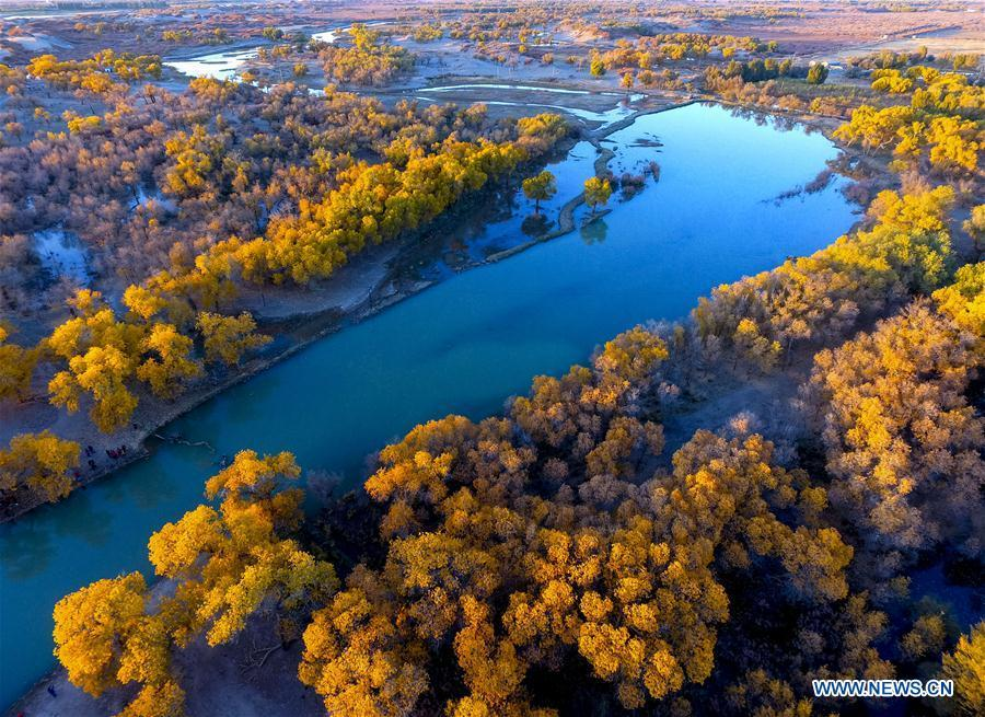 Photo taken on Oct. 13, 2017 shows the autumn scenery of populus euphratica trees in Ejina Banner, north China\'s Inner Mongolia Autonomous Region. China will hold the Conference on Dialogue of Asian Civilizations starting from May 15. Under the theme of \
