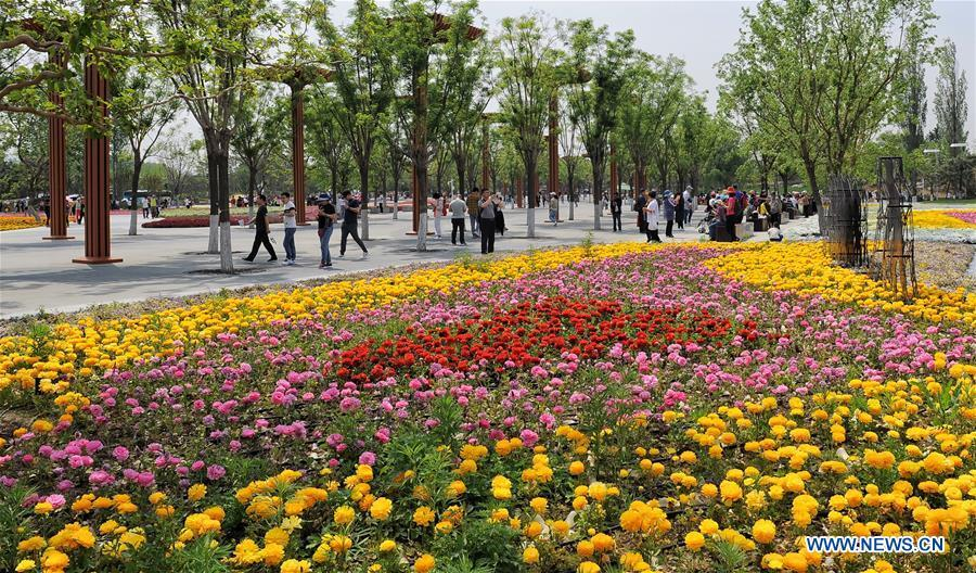 Tourists visit the Beijing International Horticultural Exhibition in Yanqing District of Beijing, capital of China, May 10, 2019. The Beijing International Horticultural Exhibition has welcomed a large number of tourists from home and abroad since the opening. As of May 9, it has seen more than 500,000 visitors, according to the Beijing International Horticultural Exhibition Coordination Bureau. (Xinhua/Li Xin)