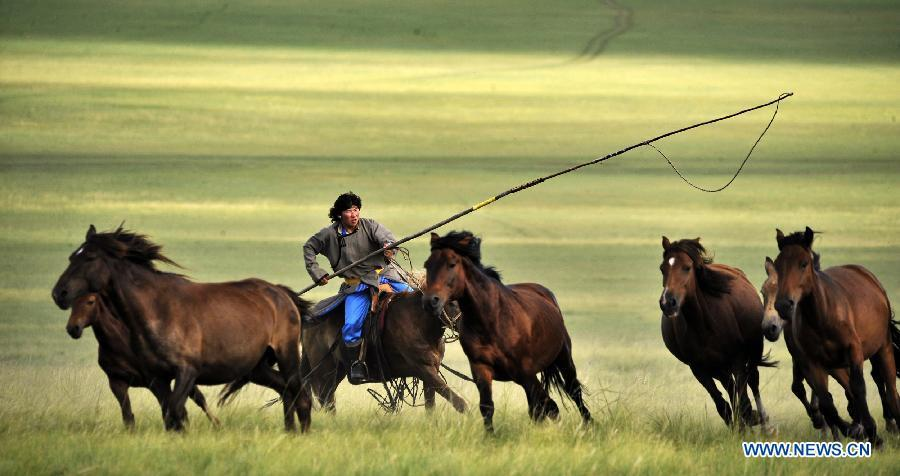 A herdsman lassos horses in Chen Barag Qi on the Hulun Buir Grasslands in north China\'s Inner Mongolia Autonomous Region, Aug. 27, 2010. China will hold the Conference on Dialogue of Asian Civilizations starting from May 15. Under the theme of \