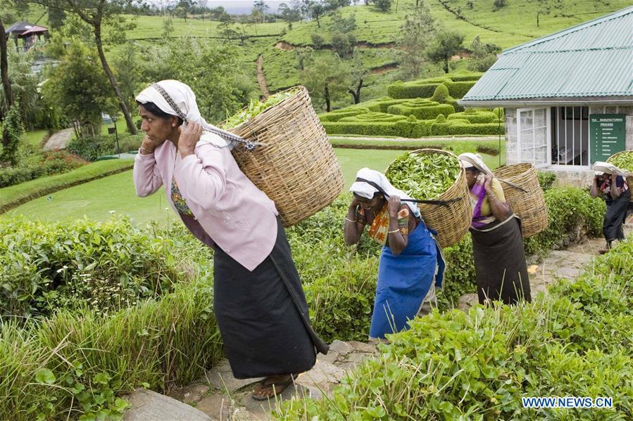 Farmers carry baskets of tea leaves in Nuwara Eliya, Sri Lanka, on April 17, 2010. As an important part of Asian culture, tea is a special bond among Asian countries to deepen friendship and boost mutual exchanges. China will hold the Conference on Dialogue of Asian Civilizations starting from May 15. Under the theme of \
